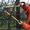 Обрезка плодовых деревьев,  обрезка и обработка сада #855790