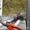 Обрезка плодовых и декоративных деревьев. Обрезка сада Киев и область  #420582