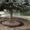 Посадка деревьев (крупномеров) #420598