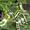 Ландшафтный дизайн,  озеленение #420602