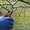 Обрезка деревьев  и кустарников. Обрезка плодовых деревьев #544422