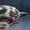 Античне мистецтво. Альбом з серії «Світове мистецтво в музеях України» #1610694