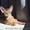 Абиссинский котенок - роскошный подарок для ваших близких  #1493089