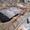 Автономная канализация,  септик,  биостанция «под ключ». Гарантия до 10 лет  #1697275