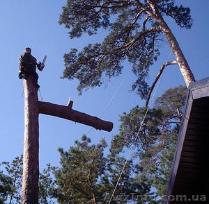 Удаление-спил аварийных деревьев(063)2372737 - Изображение #1, Объявление #796421