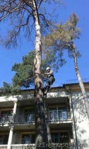 Спил деревьев в Киеве любой сложности - Изображение #1, Объявление #1567226