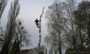 Спил деревьев в Киеве любой сложности - Изображение #2, Объявление #1567226