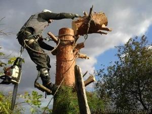 Спил деревьев в Киеве любой сложности - Изображение #3, Объявление #1567226
