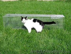 Котоловка. Живоловка. Поймать кота и кошку безопасно и надежно. Доставка - Изображение #2, Объявление #1579454