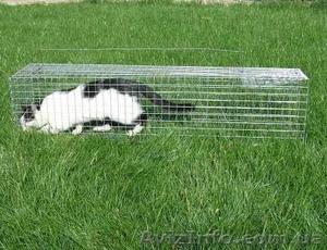 Котоловка. Живоловка. Поймать кота и кошку безопасно и надежно. Доставка - Изображение #3, Объявление #1579454