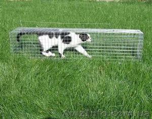 Котоловка. Живоловка. Поймать кота и кошку безопасно и надежно. Доставка - Изображение #1, Объявление #1579454