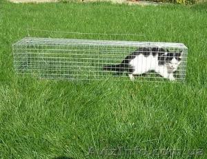 Котоловка. Живоловка. Поймать кота и кошку безопасно и надежно. Доставка - Изображение #4, Объявление #1579454