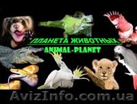 «Планета-Животных» для вас, Объявление #11487