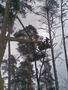 спилить дерево,удалить дерево,корчевание деревьев 233 03 70, Объявление #60553