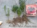 Продаём красивые черенки декоративных деревьев
