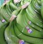 продадим бананы - Изображение #2, Объявление #461554