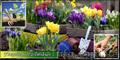 Устройство цветников,  посадка цветов