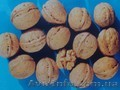 Предлагаем саженцы грецкого ореха