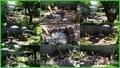 Здамо: Екологічно-оздоровча дача курортно-санітарного типу в Києві - Изображение #3, Объявление #658076