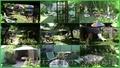 Здамо: Екологічно-оздоровча дача курортно-санітарного типу в Києві - Изображение #2, Объявление #658076