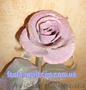 Сувениры Подарки Булава Подкова Медали Сертификаты Кованые розы Шкатулки - Изображение #3, Объявление #856738