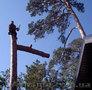Спил аварийных деревьев.Киев.