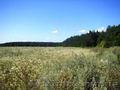 Продам участок 2 га  под строительство в Березовке 17 км от Киева по Житомирской
