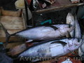 Италия Сицилия Гид Экскурсии Рыбалка  Все услуги - Изображение #2, Объявление #967400