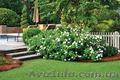 Уход за садом. Услуги садовника, Объявление #1047678