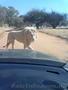 Такси в ЮАР. Йоханнесбург. Претория.