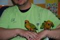 Ручной попугай для разговора Сенегал и Аратинга, продажа - Изображение #4, Объявление #1067531