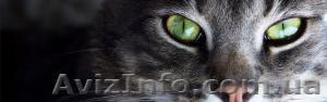 Veterinariya  Портал о домашних животных,максимум информации., Объявление #1216376