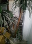 Вазон искусственная  пальма б/у