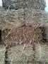 Кули из камыша, снопа, утеплитель - Изображение #2, Объявление #1307151