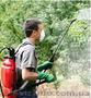 Обработка сада от болезней и вредителей