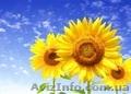 Семена кукурузы,  семена подсолнечника,  семена сорго.