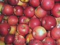 Польское яблоко от производителя в розницу и оптом.