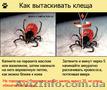 Уничтожение насекомых, грызунов. - Изображение #2, Объявление #880355