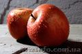 Яблоко польское от производителя в розницу и оптом.