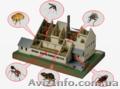 Уничтожение насекомых, грызунов. - Изображение #6, Объявление #880355