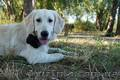 Дрессировка собак и зоопсихология - занятия для школьников и всех желающих