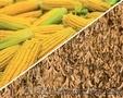 Амарок гібрид кукурудзи, Объявление #1518886