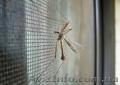 Москитные сетки оконные и дверные от Дизайн Пласт®  - Изображение #10, Объявление #1523136