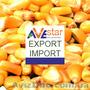 До уваги зернотрейдерів. Закуповуємо кукурудзу. CIF,  Коломбо,  Шрі-Ланка.