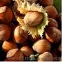 «Солнце сад» - Садовый центр предлагает оптом следующие сорта саженцев