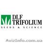 Семена газонной травы DLF Trifolium по оптовым ценам