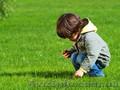 ОПТОВАЯ ЦЕНА Семена газонной травы DLF Trifolium - Изображение #2, Объявление #1626181