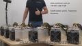 Майнер Asic Antminer Bitmain S9,  S9i,  D3,  T9+,  L3+ от 1 шт. и ОПТ
