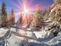 «Новогоднее  Закарпатье», Объявление #1604228