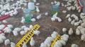Супер Цыплята бройлер КОББ-500. Венгрия - Изображение #2, Объявление #1572411
